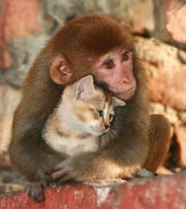 adorable-different-animals-love16