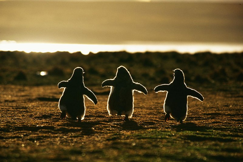 penguin-awareness-day-photography-18
