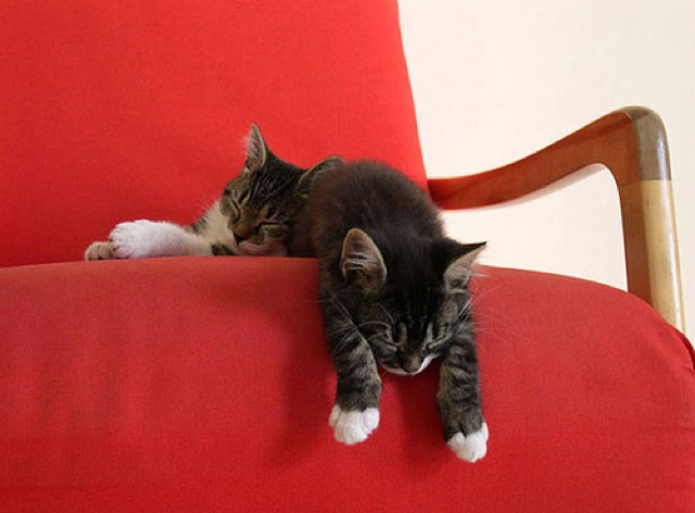 awkward-cat-sleeping-positions10