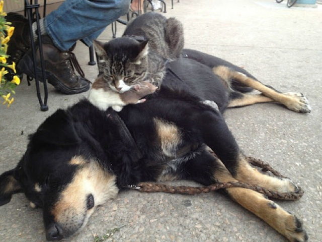 awkward-cat-sleeping-positions25