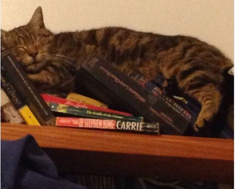 awkward-cat-sleeping-positions4