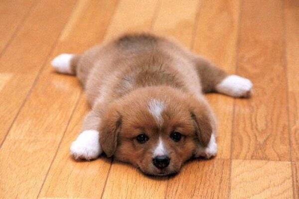 Photos-of-cute-puppies-009