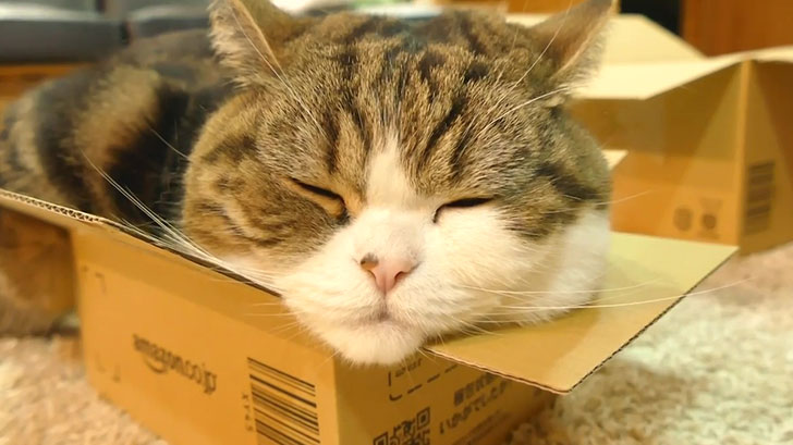 大・中・小の空き箱…どれにネコさんは入るのでしょうか?