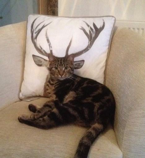 タイミングバッチリで撮影出来たネコさんの奇跡の写真10選-8