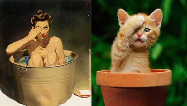 Cats-Vs-Pinup-Models-12
