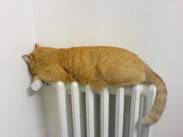 cats-enjoying-warmth-51__605