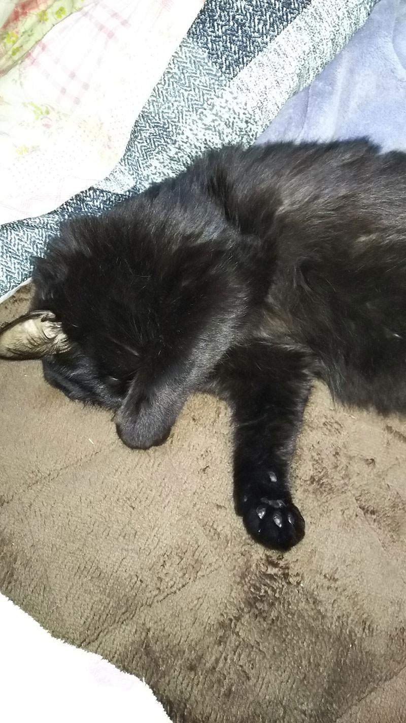 寝るときは、顔を隠します(笑)