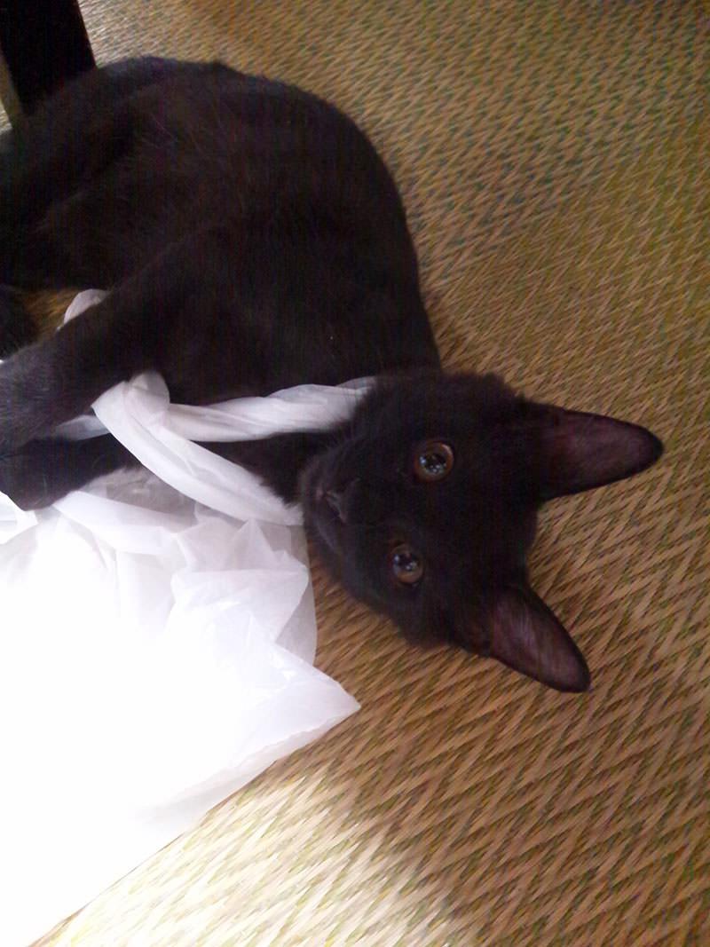 ナイロン袋、大好きです