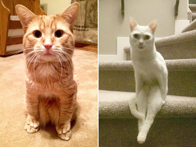 sitting-cats12