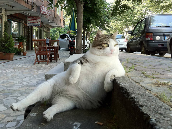 sitting-cats19