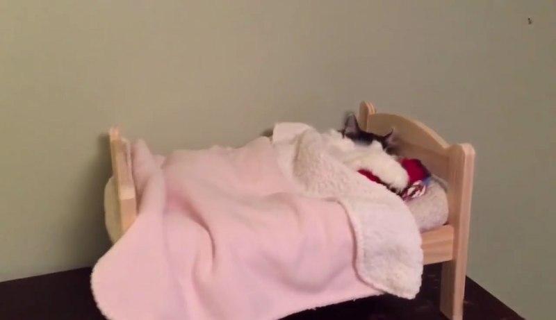 01小さなベッドでウトウトするネコさんにほんわか癒される