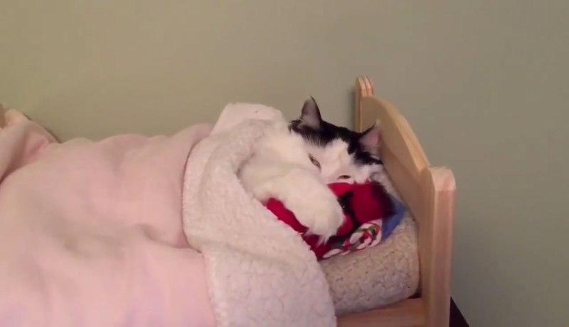 02小さなベッドでウトウトするネコさんにほんわか癒される