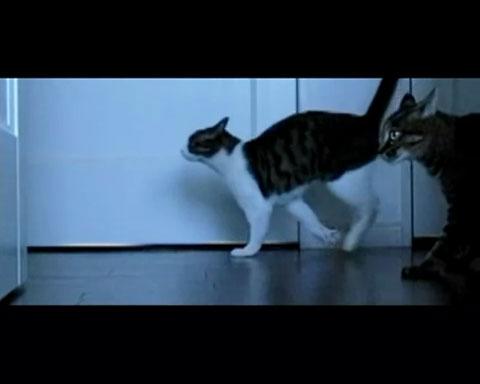 032匹のネコさんタッグが贈るふしぎと元気の出るエンターテイメント!