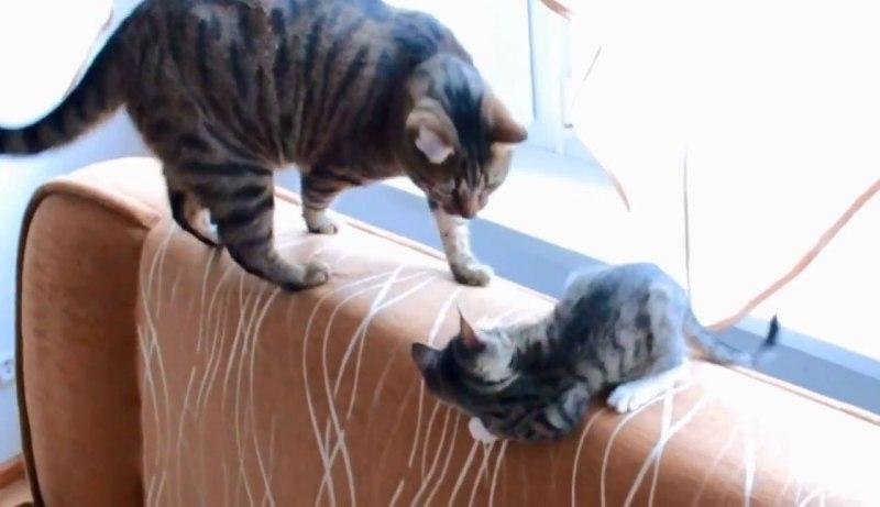 04両者一歩も譲らない!しっぽで遊びたい子ネコさんといい加減ゆっくりさせてほしいネコさんとの攻防戦がおもしろすぎる(笑)