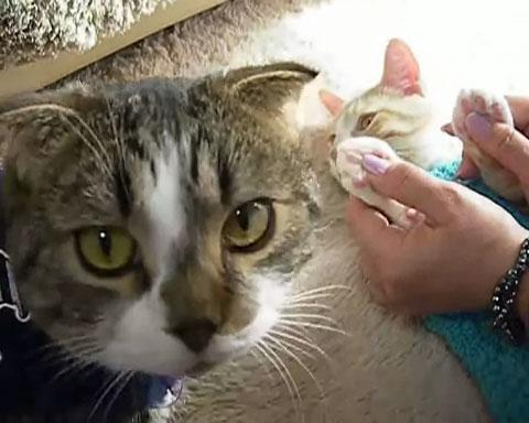 03「とろ~ん♪」肉球マッサージに浸るネコさんがあまりの気持ちよさにうっとりしてる♥