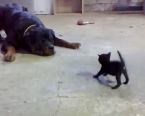01「前世は英雄!!」圧倒的な体格差にもかかわらず果敢に立ち向かう小さな黒ネコさんがかっこいい!!