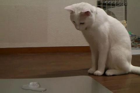 01「にゃんだこれは??」はじめて氷をみたネコさんの摩訶不思議な対応がおもしろい♪