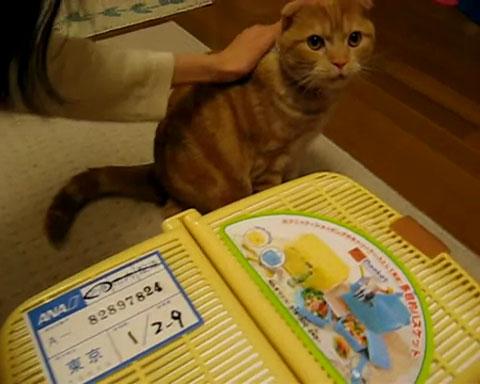 01「まいったにゃぁ~」いきなり新しく家にやってきた子ネコさんに先輩ネコさんがそわそわしてる・・・(笑)