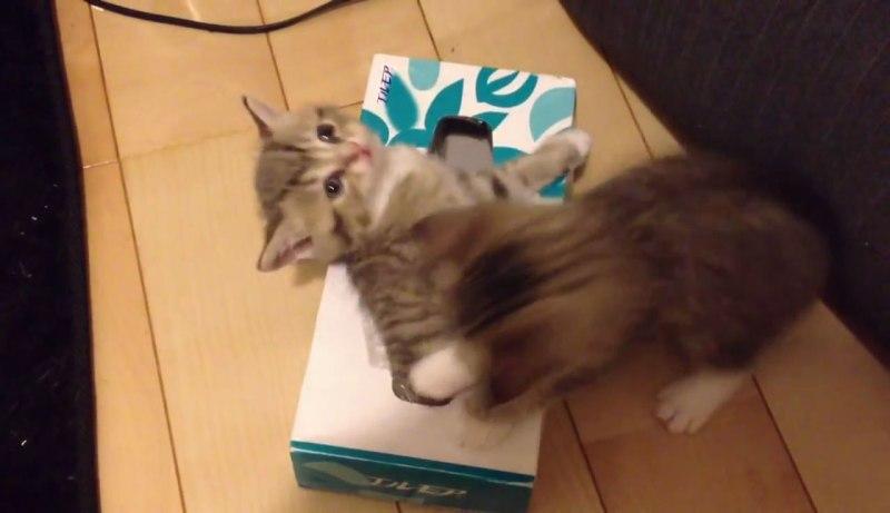 06遊びじゃなかった!子ネコさんの下に注目!ティッシュ箱の中で起きていたこととは??