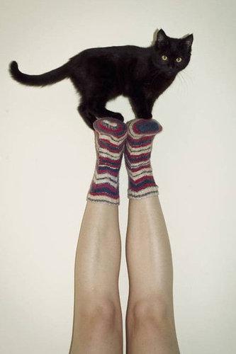 ネコさんのとっても凄いバランス感覚が分かる写真10選+2枚02