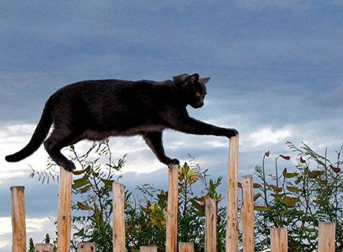 ネコさんのとっても凄いバランス感覚が分かる写真10選+2枚03