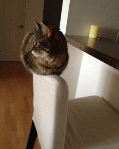 ネコさんのとっても凄いバランス感覚が分かる写真10選+2枚04