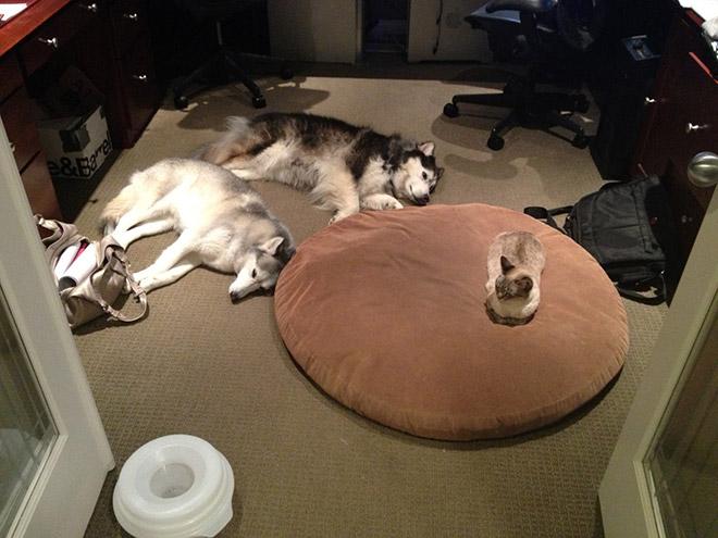 stolen-bed4