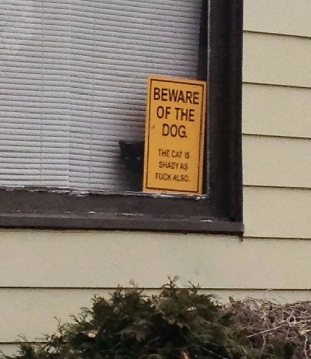 beware-of-the-dog-11-57ee5605bc257__605