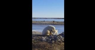 polar-bear-petting-dog-youtube