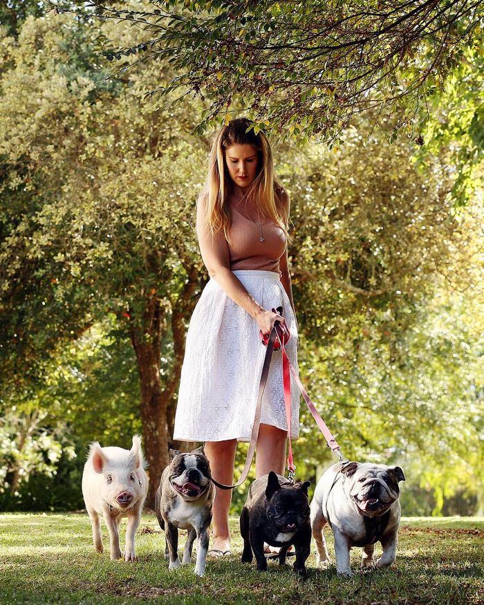 pig-puppy-olive-16