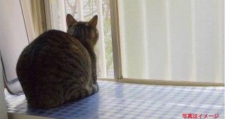 飼い猫が「外に出せ」って言うから出し、 30秒で帰ってきてとった体勢が話題に