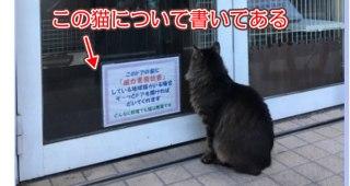 お店の前にいる猫について店舗側が洒落の利いた貼り紙を貼って対策している