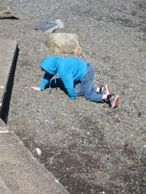 """Looking for that elusive """"perfect"""" flat rock."""