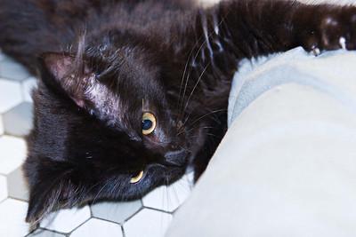 Cat Toy Hangs On Door Knob