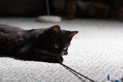 big scary feral kitten!