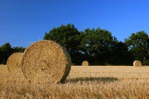 HarvestStrawBalesSchleswig-Holstein (commons-wikimedia-org)