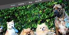 best pet store shopify themes feature