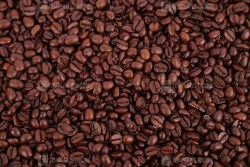 Coffee beans close up stock image
