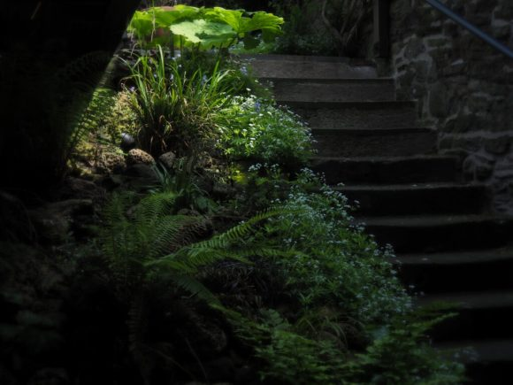 The-steps-up-to-the-garden-with-grasses-sedges-and-ferns.-The-sweet-woodruff-is-lightly-scented-and-prolific