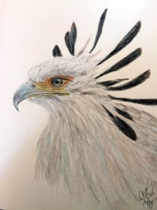 Secretary Bird2