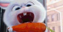 angry bunny 2