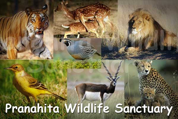 pranahita-wildlife-sanctuary