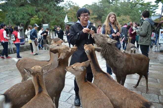 If you want to be popular with the deer's, having Shikasenbei is a must!