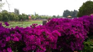 """At 大观公园 (""""Daguan Gongyuan""""), one of Kunming's bigger parks"""