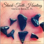 I Went Shark Tooth Hunting!