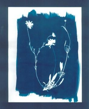 cyanotypes fleurs - 03