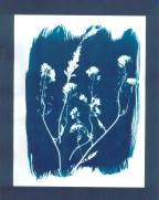 cyanotypes fleurs - 04