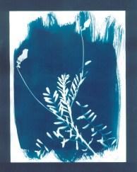 cyanotypes fleurs - 08