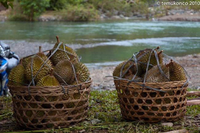 Surga Durian di Lamseujen