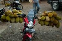 Sepeda Motor Durian